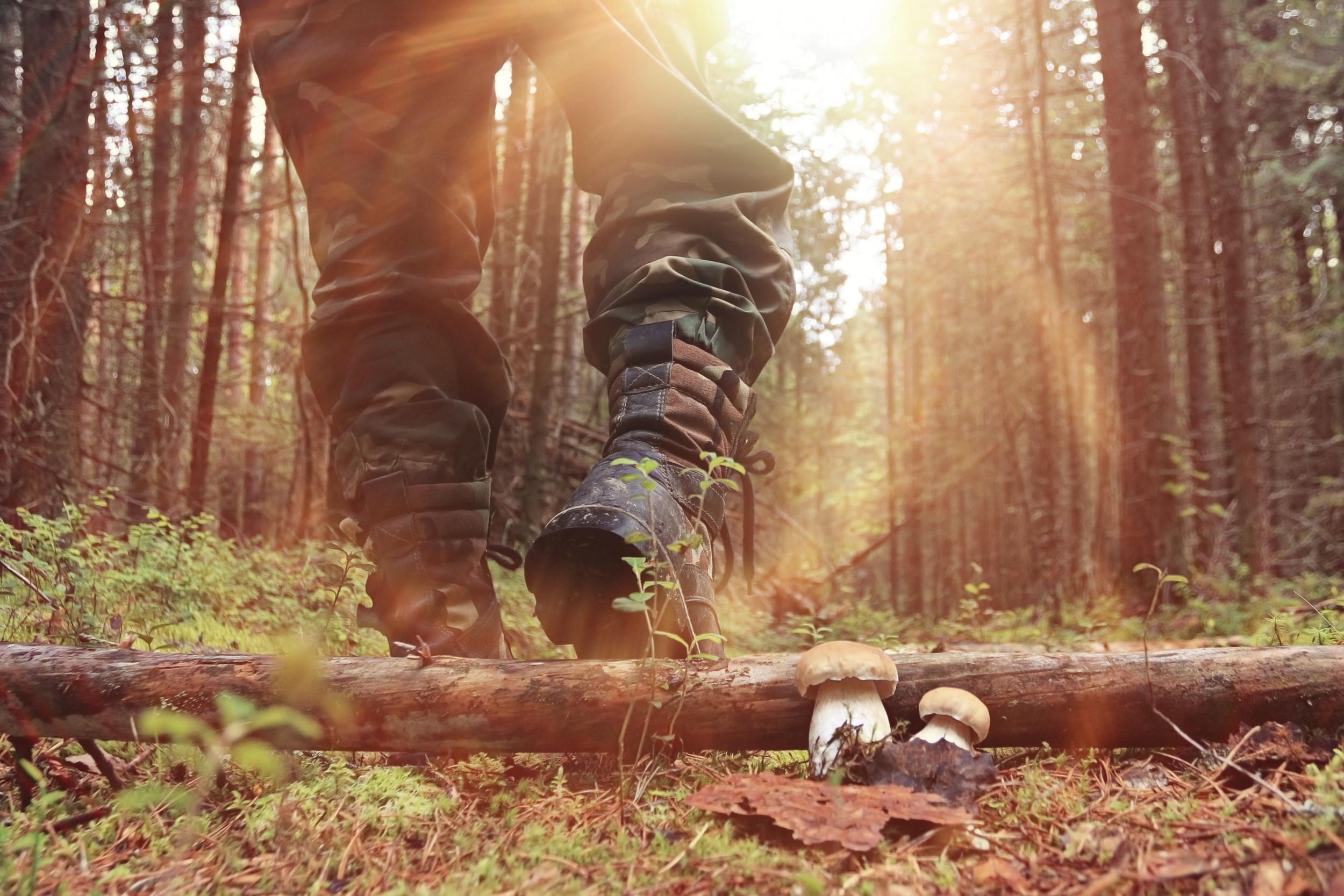 Hitta en jaktmark